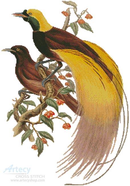 Artecy Cross Stitch. Greater Bird of Paradise Cross Stitch Pattern ...