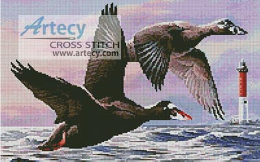 Uruguay Duck Hunting